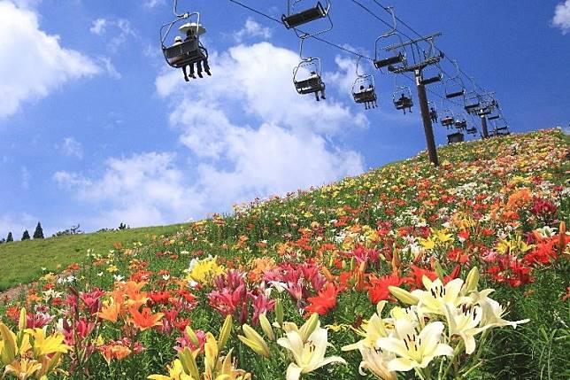 訪客可乘坐纜車前往627米的高位賞花。(互聯網)