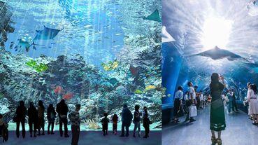 最美水族館換人當?桃園「國際級水族館」X park近4層樓透明觀景窗,成日本首座海外水族館!