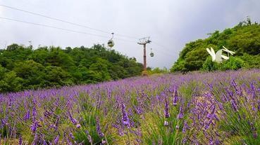 【紫色之夏】北海道以外的薰衣草聖地