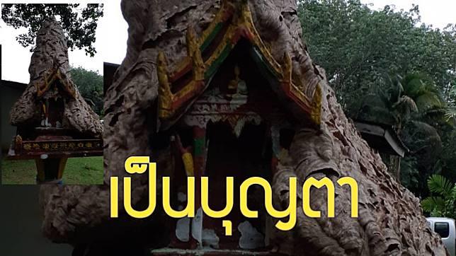 กระบี่-ฮือฮา ต่อหัวเสือทำรังบนศาลพระภูมิ ชาวบ้านเชื่อเรื่องสิ่งศักดิ์สิทธิ์ (ชมคลิป)