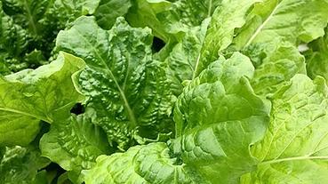 台灣蔬菜水果有哪些?24節氣代表作物、春夏秋冬必吃蔬菜都幫你筆記好了!
