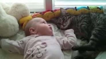 太可愛了!來看看貓咪遇上小寶寶的超逗趣反應