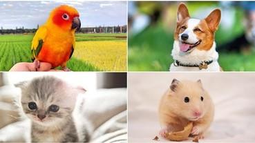 人際關係不順?日本占卜師推出 4 種動物心理測驗 2019 年想轉運看這邊!