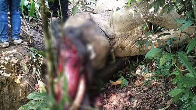 Polisi Kantongi Identitas Terduga Pembunuh Gajah Bunta di Aceh Timur
