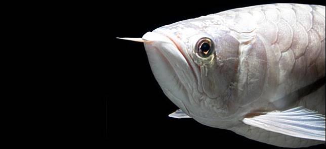 Penjual ikan hias online dating