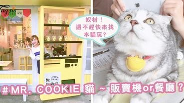 這是販賣機?還是餐廳?「MR. COOKIE 貓」~超萌店貓,正在等你跟牠玩喔!