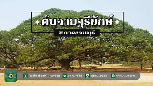 Unseen! ต้นจามจุรียักษ์ อายุกว่า 100 ปี จ.กาญจนบุรี