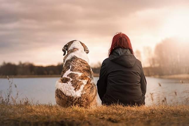 Hewan apa yang pertama kali dipelihara manusia, ya?