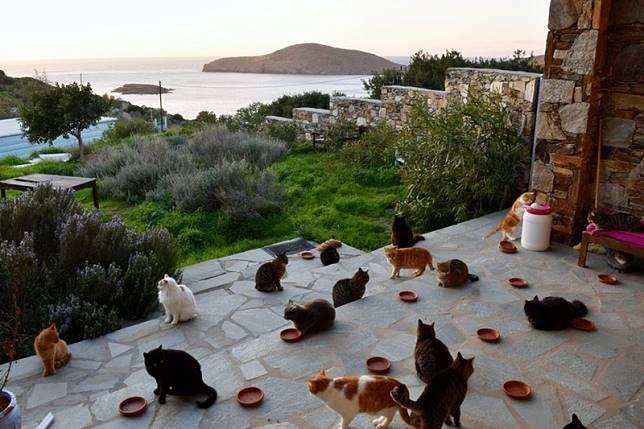 งานในฝัน สถานพักพิงแมวประกาศรับผู้ดูแลแก๊งเหมียว ทำงานบนเกาะสวรรค์ในกรีซ ที่พักฟรี มีเงินเดือนให้!