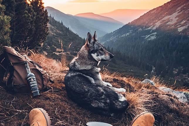 เที่ยวแบบคนรักหมา อวดทริปสุดวิเศษแบบไม่โดนเหม็นหน้าเพราะมีน้องหมาเป็นนายแบบ