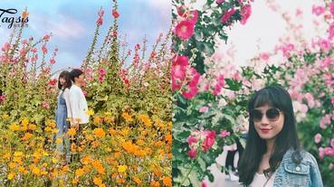 快去賞花拍照!琉璃仙境~由紫色/粉紅/橙色的鮮花組成~女生們最愛的顏色都有了!