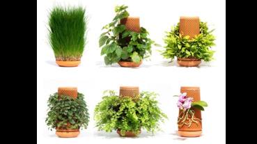 特殊花器讓水耕植物長成盆栽塔