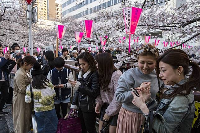 Major cherry blossom festivals in Japan have been cancelled due to the deadly new coronavirus, the latest in a growing list of events quashed as the epidemic spreads globally.