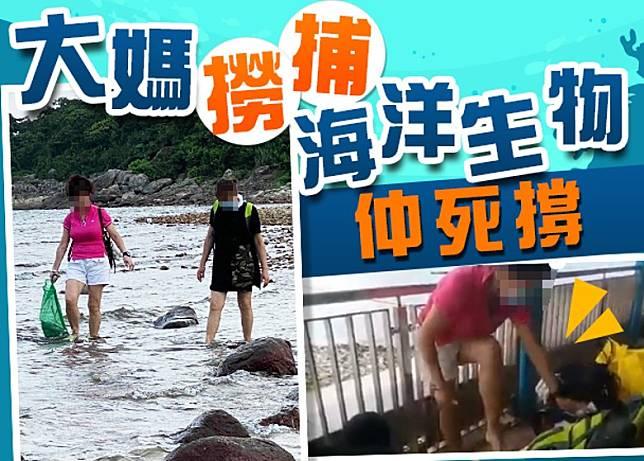3名大媽在橋咀島撈捕海洋生物,被正義港女出言教訓。