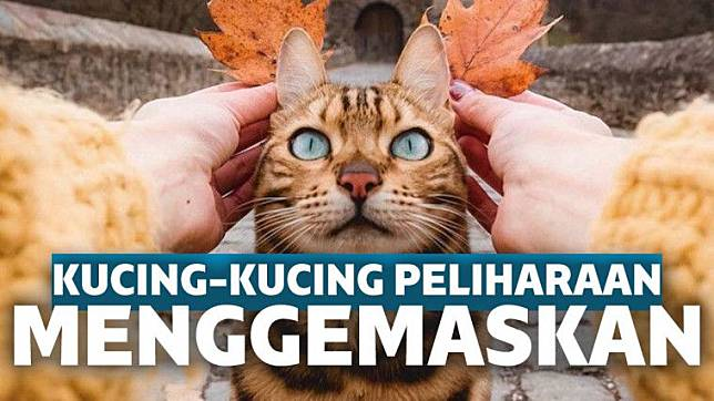 Info Jenis Kucing Peliharaan Yang Recommended Keepo Me Line Today