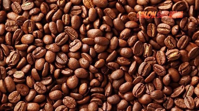 Cari muka diantara tumpukan biji kopi
