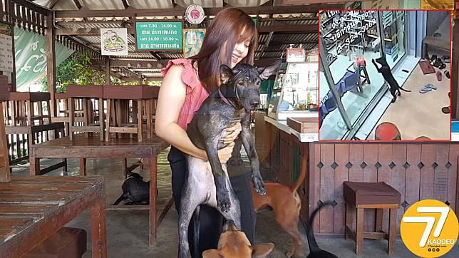 น้องหมาพันธุ์แสนรู้หลงทางมาตะกายประตูขอความช่วยเหลือที่คลินิกสัตวแพทย์