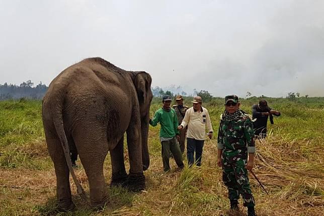 Hutan di di Banyuasin terbakar, 38 gajah berhasil diselamatkan