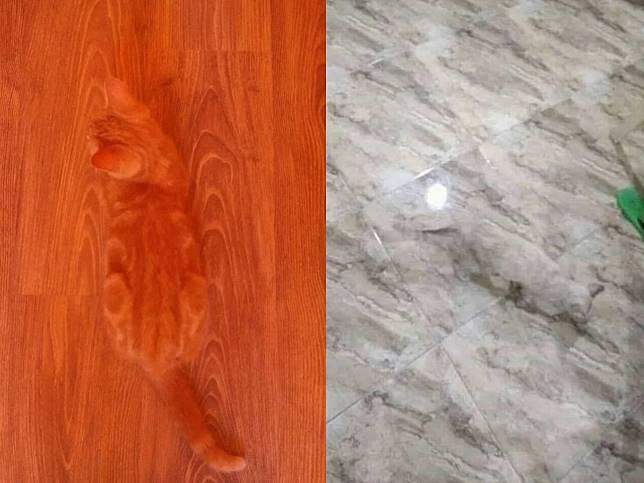 眼力大考驗!超強偽裝術 你找得到木柴堆裡的貓咪嗎?