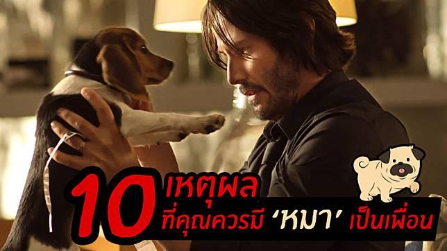 """10 เหตุผลที่หลายคน อยากมี """"หมาเป็นเพื่อน"""" ดีกว่ามีเพื่อนหมาๆ"""