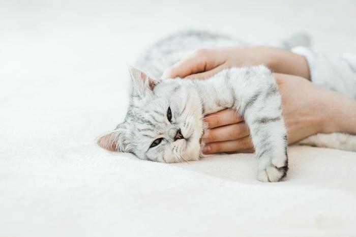日本養貓門檻高