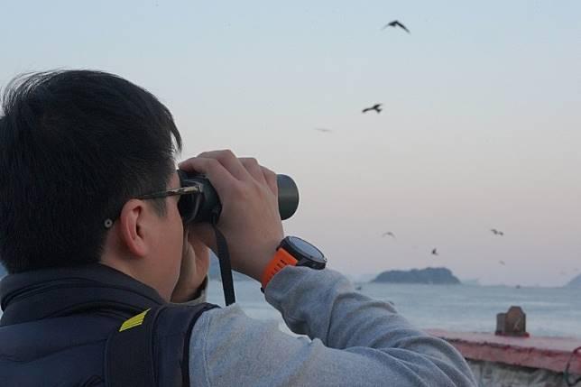 本港昨舉行首個麻鷹公眾普查,共記錄到超過500隻麻鷹。