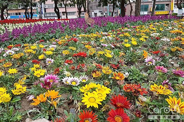 中和823紀念公園內大片勳章菊、四季海棠、孔雀草...等五顏六色,洋溢浪漫氣氛(圖/新北市政府 提供)