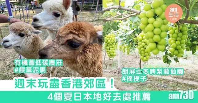 週末玩盡香港郊區! 4個夏日本地好去處推薦