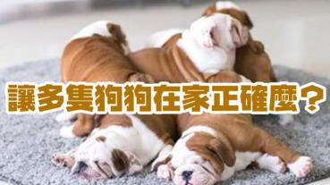 養多隻狗狗在家,正確嗎?