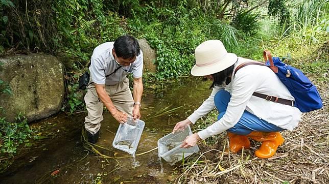 桃米休閒農業區的山溪完全沒污染,最宜進行魚蝦生態探索。(互聯網)