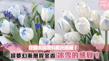 花瓣末端帶有藍色漸層!超夢幻漸層鬱金香~冰雪的感覺,散發高冷的感覺!