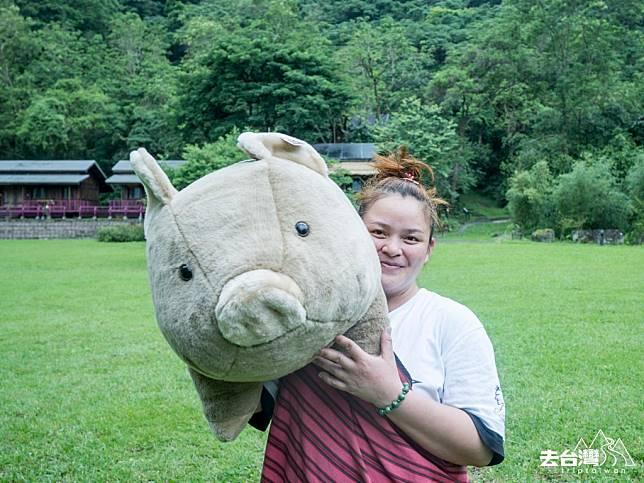 旅館內的紀念品也別具心思,當中包括大山豬毛公仔。