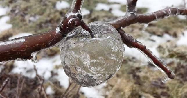 蘋果冷到吱吱叫…結果變成幽靈蘋果