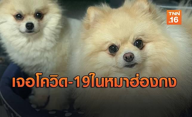 """ฮ่องกงพบ """"สุนัข"""" ของผู้ป่วยโควิด-19 มีผลบวกอ่อนๆ ส่งตรวจซ้ำหาความจริง"""