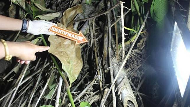 Polisi melakukan olah TKP penemuan mayat bayi laki-laki di Desa Bintang Ninggi II, Kecamatan Teweh Selatan, Kabupaten Barito Utara, Kalteng, Minggu (24/5/2020). (Foto: Satreskrim Polres Barito Utara)