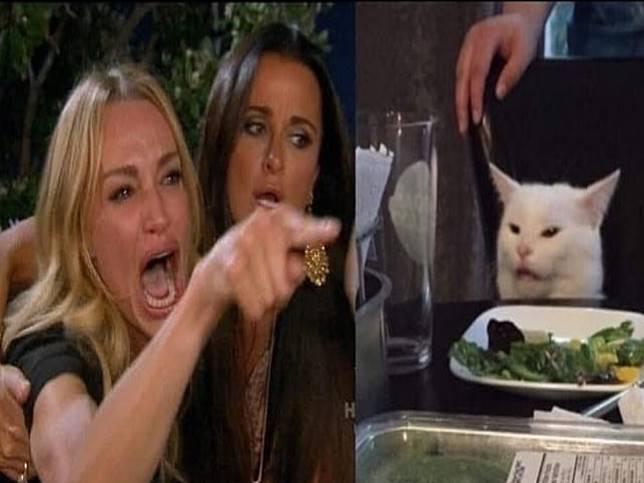 白貓因為一張照片而爆紅 背後原因竟然只是討厭「這個」?