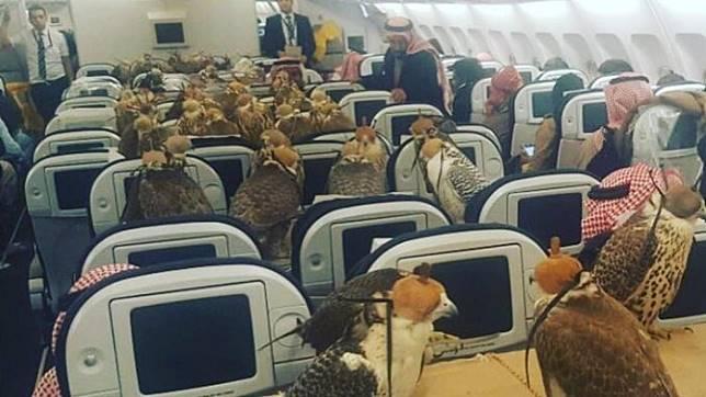 7 Kejadian Tak Biasa yang Pernah Terjadi di Penerbangan, Bawa Elang hingga Sembunyikan Wajah