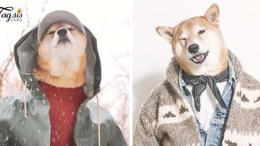 IG破34萬追蹤!柴犬界的型男超模 ~「Menswear Dog」,可能比你男友帥!