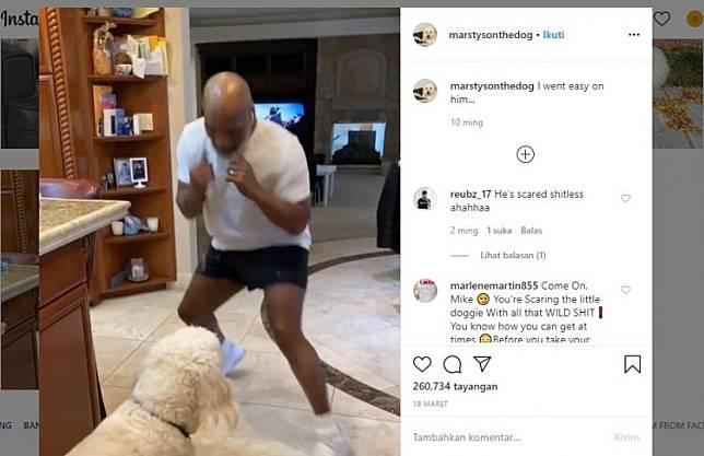 Mike Tyson berlatih tinju dengan anjing kesayangan bernama Mars.