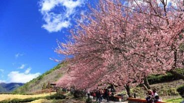 櫻花季來臨!2020全台賞櫻聖地大公開 和紅粉佳人來場浪漫約會