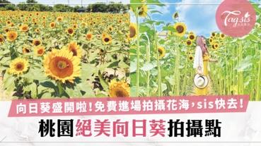 桃園免費進場的「向日葵花海」sis趁著暑假約好姊妹去拍到瘋啊!向日葵比人還高耶~
