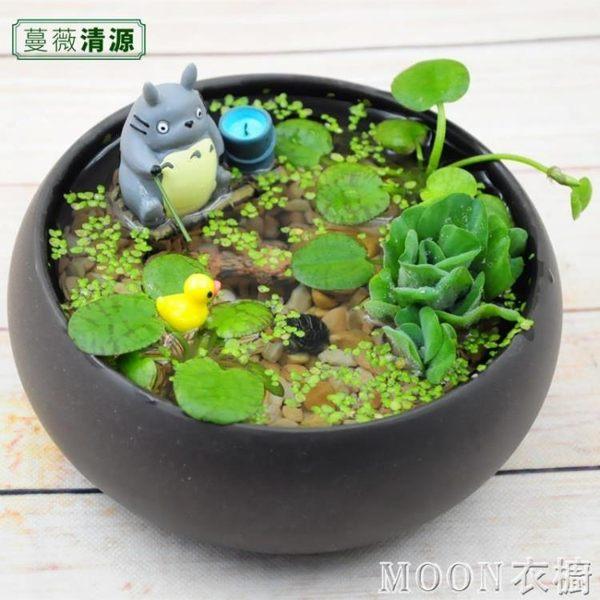 生態瓶 幸福海藻球水培植物微景觀生態瓶辦公室小盆栽創意DIY小魚缸浮萍 京都3C
