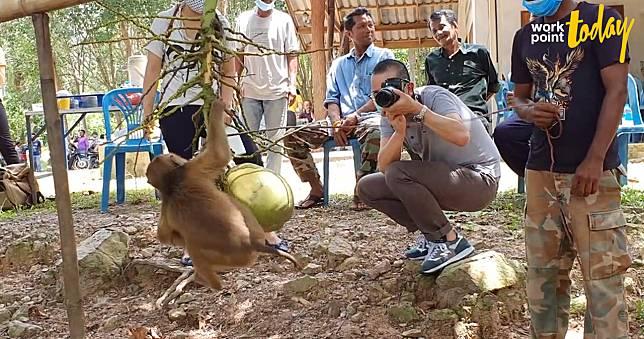 ผู้เลี้ยงลิงเก็บมะพร้าวพาสื่อญี่ปุ่นดูทุกขั้นตอน ยันให้เก็บแค่วันละ 300 ลูก ไม่มีทารุณ
