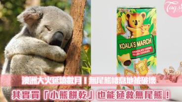 澳洲大火延燒數月!我們能做什麼?其實買「小熊餅乾」也能拯救無尾熊~
