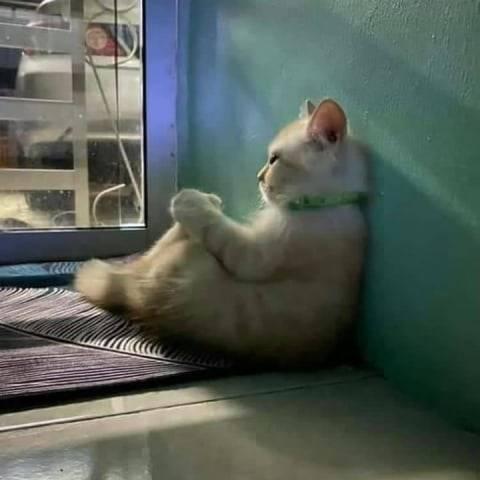 Mahasiswa Ini Pasang Foto Kucing Ngenes di WA, Skripsi Langsung Disetujui Dosen
