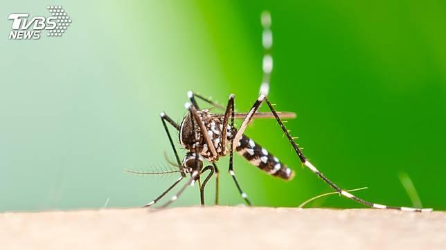 屈公病主要是經病媒蚊傳播。示意圖/TVBS