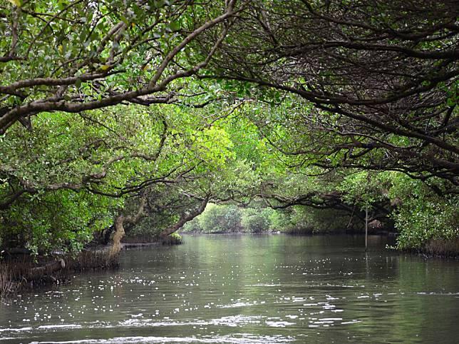 四草綠色隧道是台南著名的景點,大家戴著斗笠,坐上竹筏來一趟生態遊。
