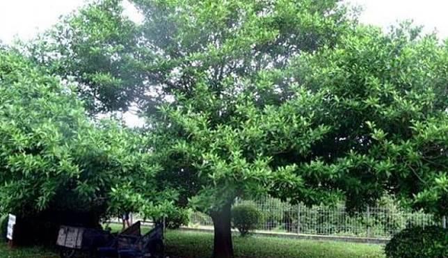 Dari Berdiri Sendiri Hingga Tumbuh di Atas Batu, 4 Pohon Ini Dikeramatkan oleh Warga Sekitar