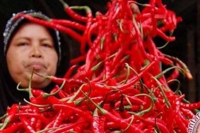 Harga cabai tembus Rp80.000, pengusaha rumah makan menggerutu