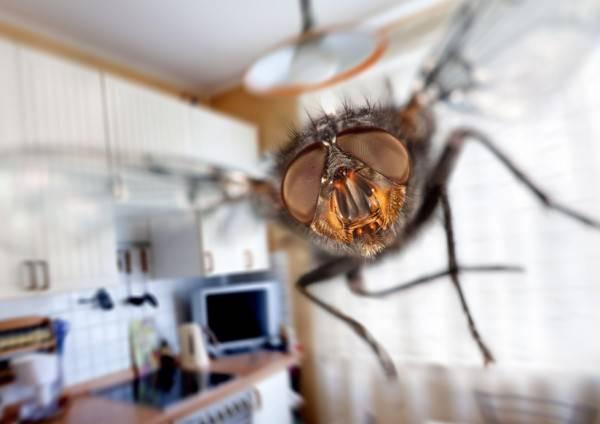 หายรำคาญไปเลย! วิธีไล่แมลงวัน แบบง่ายๆ ไม่ให้มากวนใจเรา